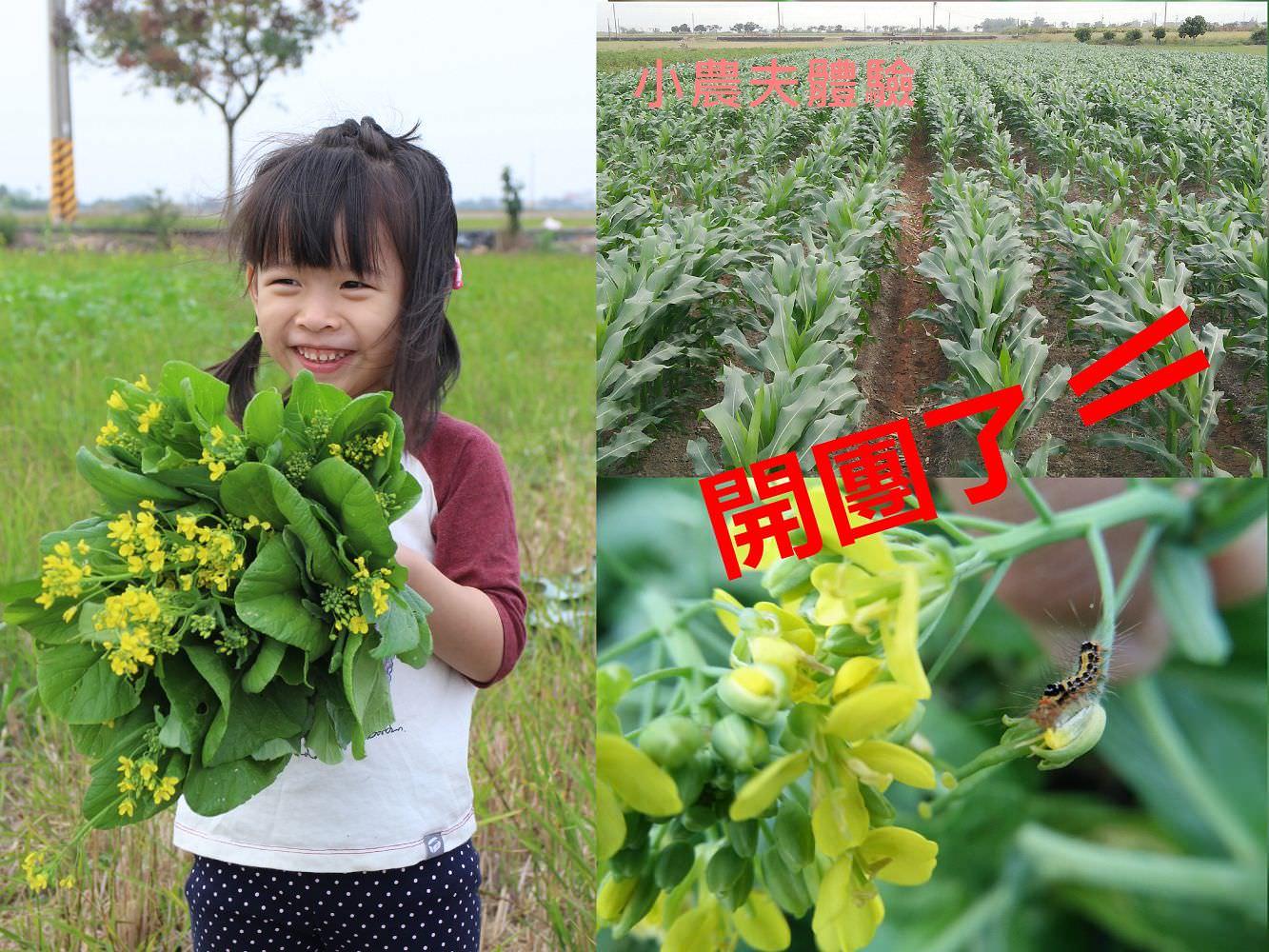 食農教育︱小農夫體驗:一起來認識昆蟲和我們吃的蔬菜,體驗產地到餐桌的概念