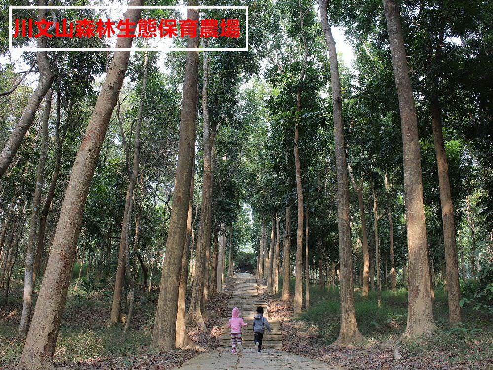 台南景點︱川文山森林生態保育農場:小陽明山之稱,該怎麼形容這邊的好呢?坡度和緩、空氣清新、停車方便、免收門票,好處說不完