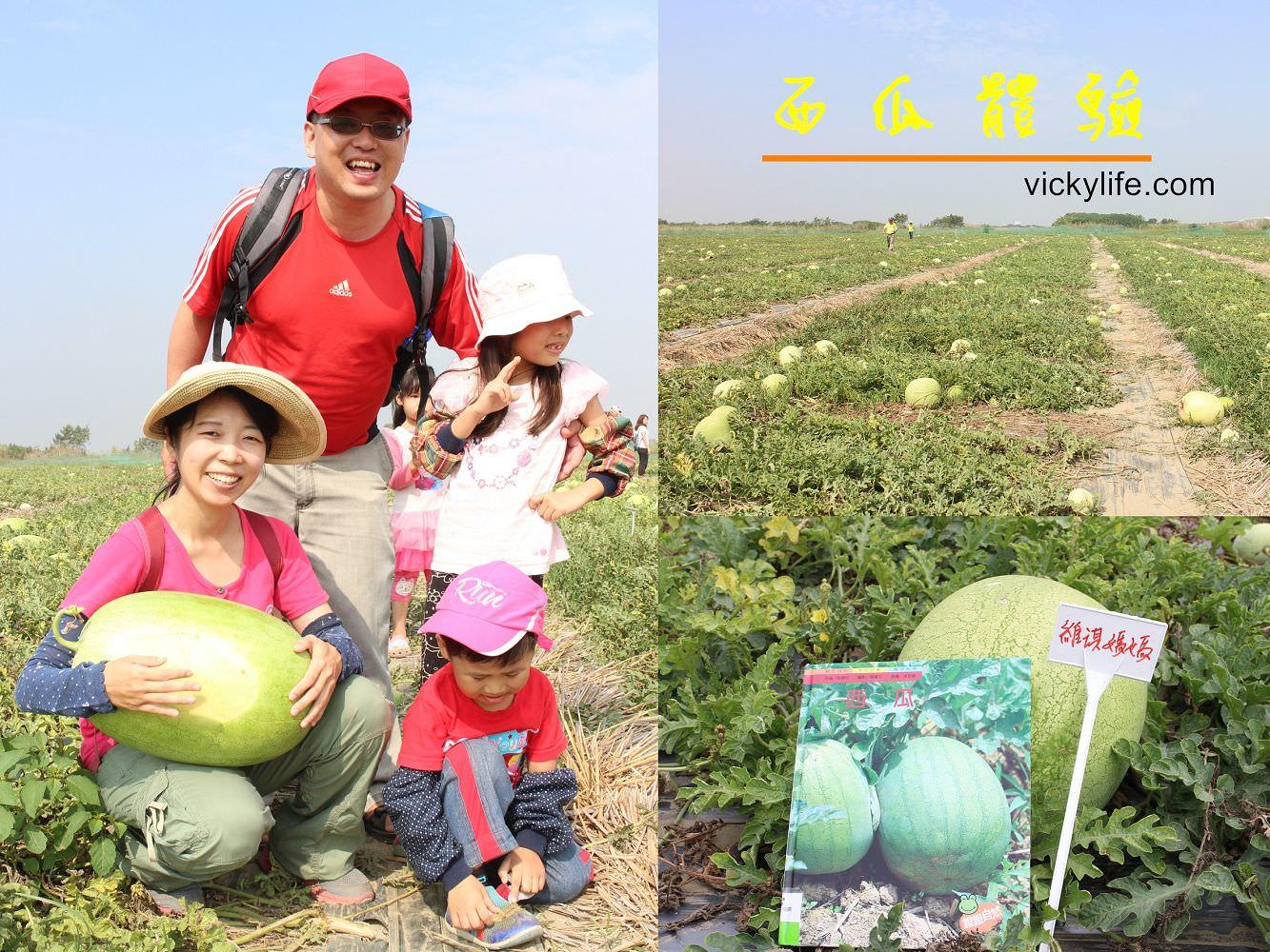 西瓜節︱食農教育︱種瓜得瓜,大人小孩開心吃瓜,開心笑哈哈