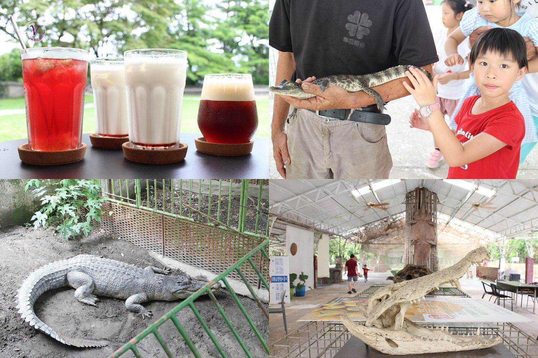 屏東親子景點︱不一樣鱷魚生態休閒農場:餵鱷魚和烏龜等可愛動物,品嘗像果凍般柔軟的黃金果
