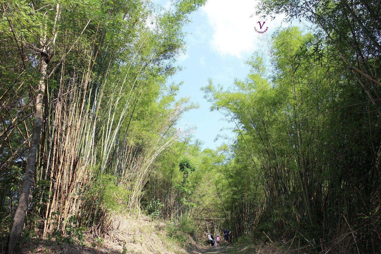 台南親子登山健行步道︱東山林安森林步道:翁鬱樹群、豐富生態、登山健行好去處