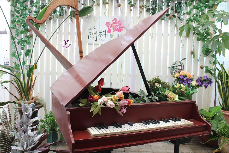 台南景點︱蘭科植物園:賞稀奇古怪的蘭花、買品種不多見的蘭花、在蘭花園裡用餐