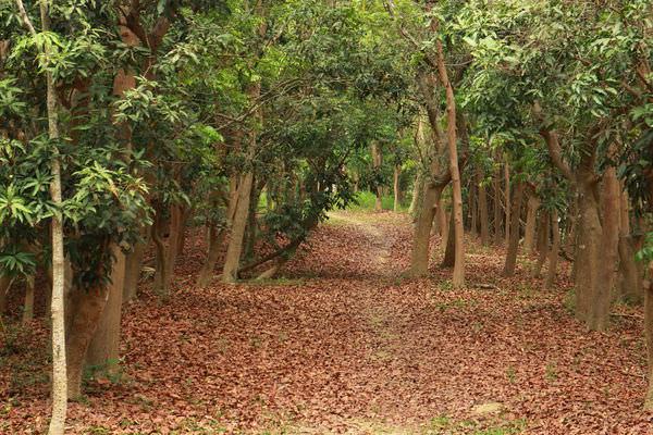 台南景點︱關廟森林公園:來場森林浴吧